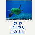 動物 2011年8月「ウミガメ」※