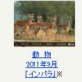 動物 2011年9月「インパラ」※