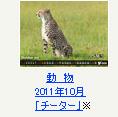 動物 2011年10月「チーター」※