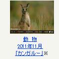 動物 2011年11月「カンガルー」※