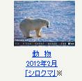 動物 2012年2月「シロクマ」※