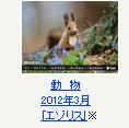 動物 2012年3月「エゾリス」※