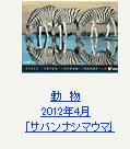 動物 2012年4月「サバンナシマウマ」※